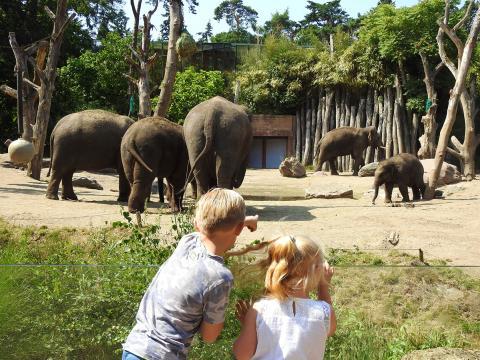 Kinderen bij olifantenfamilie.jpg